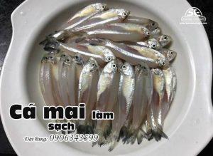 cá mai nguyên con