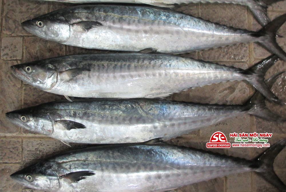 cá thu nguyên con
