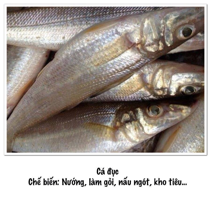 Cung cấp cá đục bống