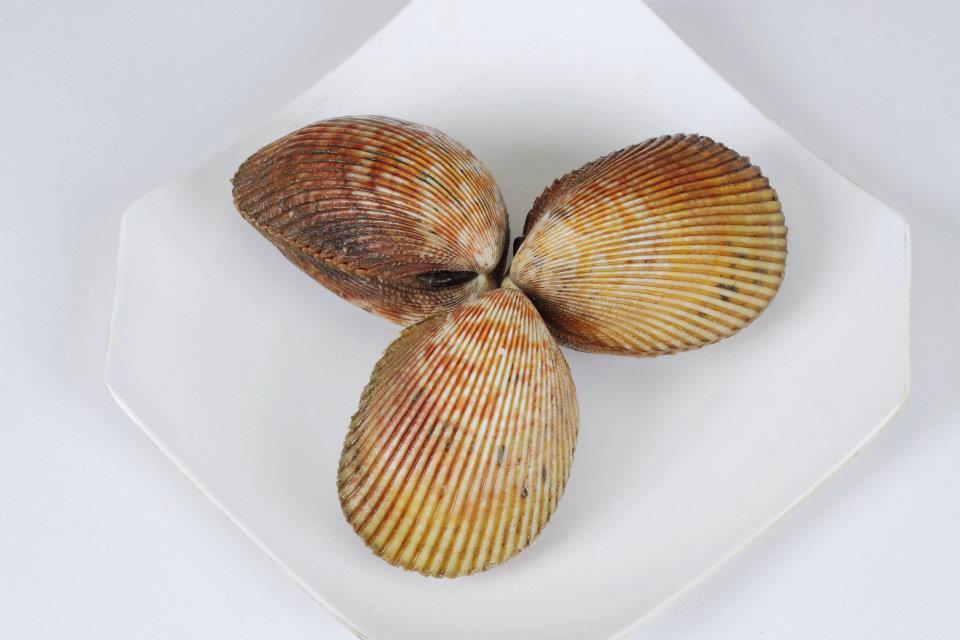Sò dương