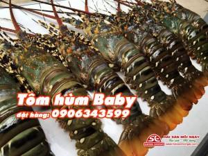 Tôm Hùm Baby