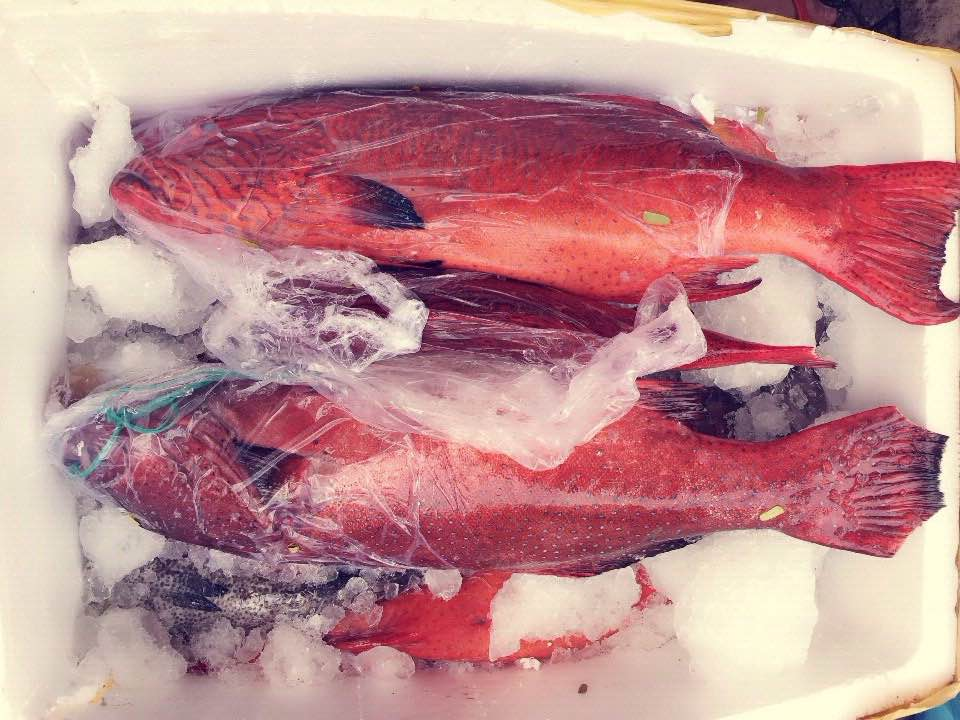 Cá mú đỏ đông lạnh