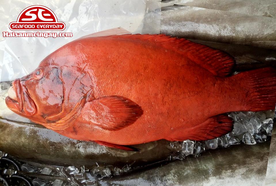 Cá mú đỏ cắt lát