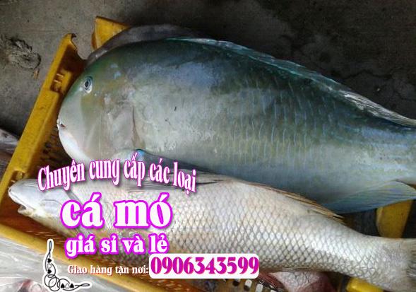 Cá mó tươi