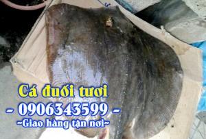 Cá đuối tươi