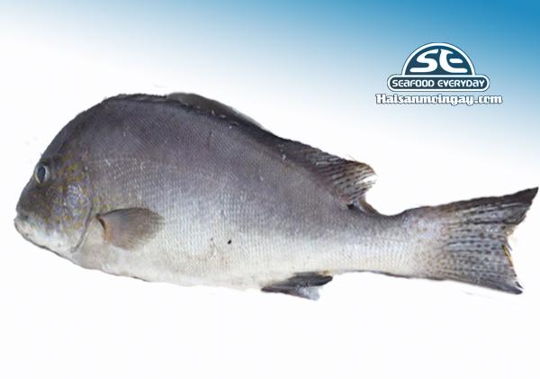 Cá kẽm