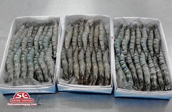 Tôm sú biển là loài tôm sú lớn sống ở vùng khơi xa
