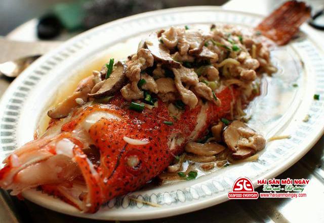 cá mú đỏ hấp nấm