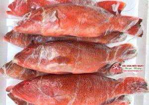 cá mú đỏ đóng gói