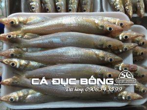 cá đục bống