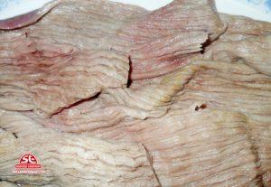 bao tử cá ngừ đại dương