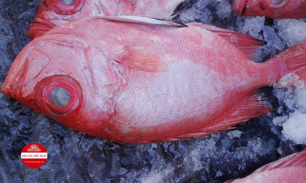 Cá Bã Trầu ở có màu đỏ toàn thân, đầu và thân dẹp, miệng rộng, thịt thơm, ngọt.