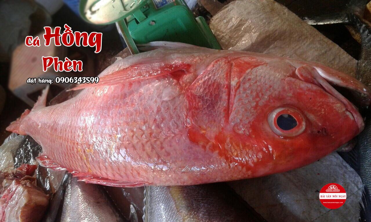 cá hồng phèn