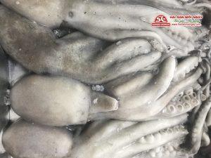 Bạch tuộc Mada