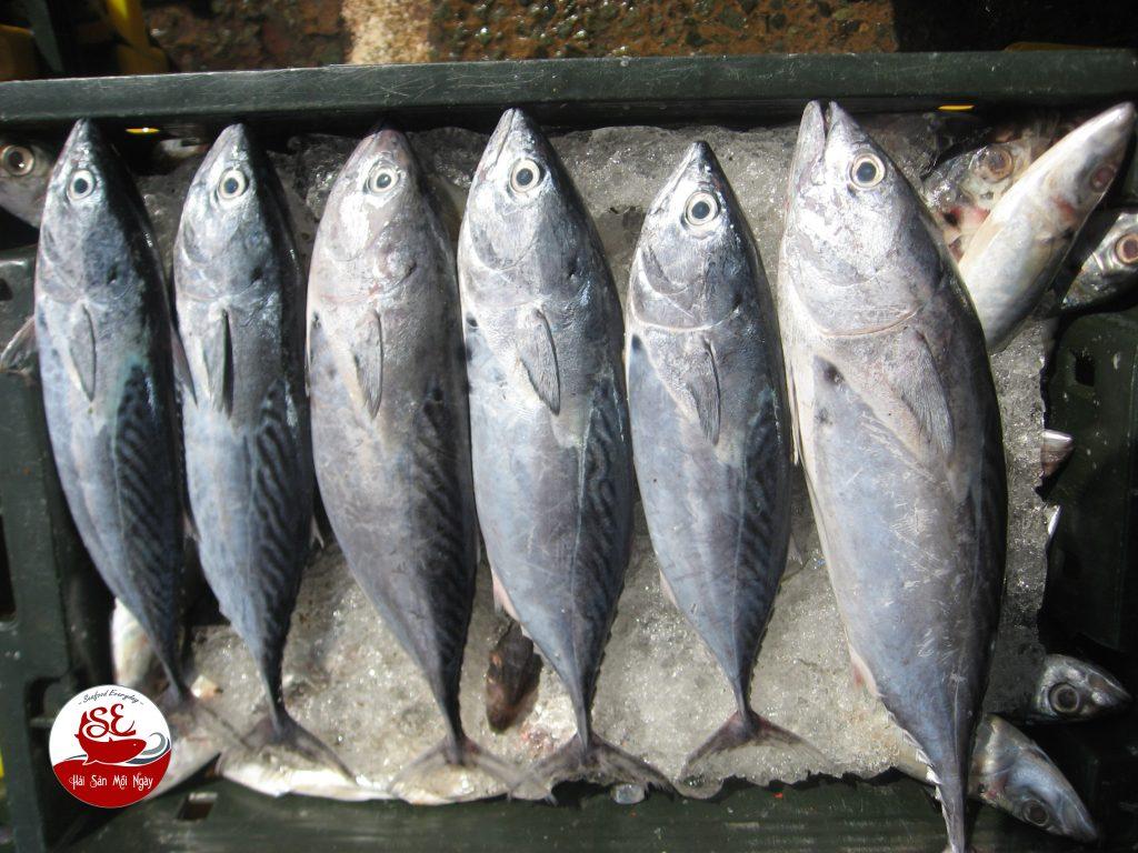 Cá ngừ ồ