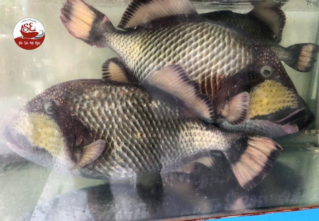 cá bò giáp