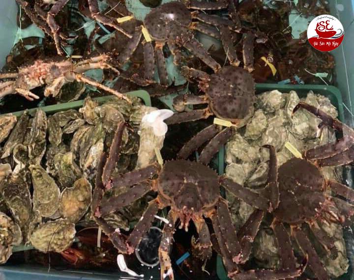 king crab sống